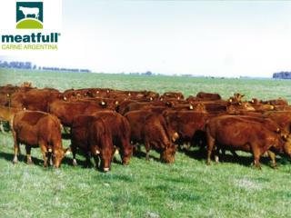 Somos una empresa argentina dedicada a la produccion de carne.