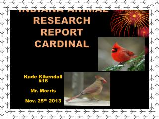 Indiana Animal research report Cardinal