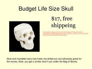 Budget Life Size Skull