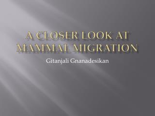 A Closer Look at Mammal Migration