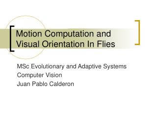Motion Computation and Visual Orientation In Flies