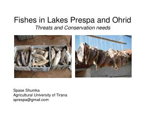 Fishes in Lakes Prespa and Ohrid Threats and Conservation needs