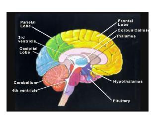 Posterior pituitary hormones: Vasopressin & Oxytocin