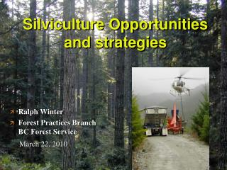 Silviculture Opportunities and strategies