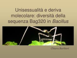 Unisessualità e deriva molecolare: diversità della sequenza Bag320 in  Bacillus