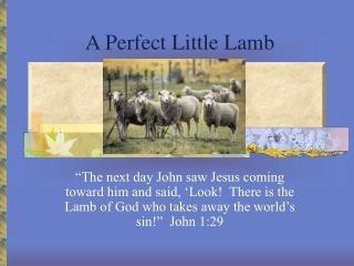 A Perfect Little Lamb