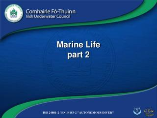 Marine Life part 2