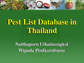 Pest List Database in Thailand