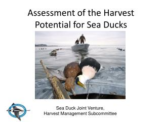 Assessment of the Harvest Potential for Sea Ducks