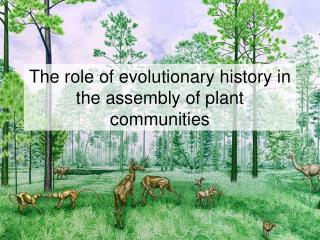The role of evolutionary history in the assembly of plant communities