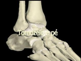O pé e o tornozelo são estruturas anatômicas muito complexas que consistem de: