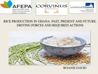 RICE PRODUCTION IN GHANA: PAST, PRESENT AND FUTURE. DRIVING FORCES AND REQUIRED ACTIONS
