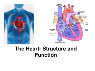 The Heart- Structure and Function