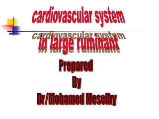 cardiovascular system in large ruminant