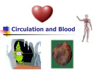 Circulation and Blood