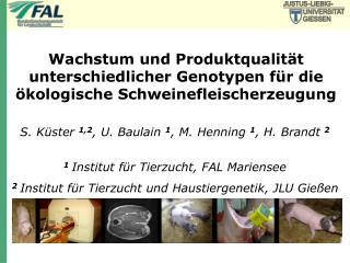 S. Küster  1,2 , U. Baulain  1 , M. Henning  1 , H. Brandt  2