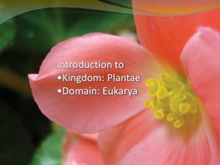 Introduction to  Kingdom: Plantae Domain: Eukarya