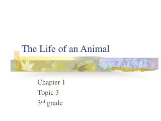 The Life of an Animal