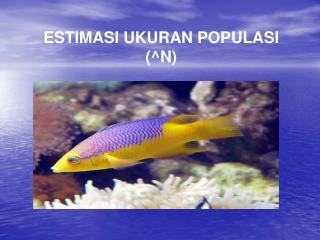 ESTIMASI UKURAN POPULASI  ( ^ N)
