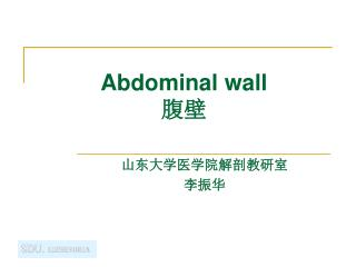 Abdominal wall 腹壁