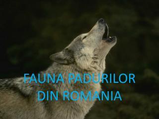 FAUNA PADURILOR DIN ROMANIA