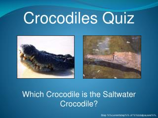 Crocodiles Quiz