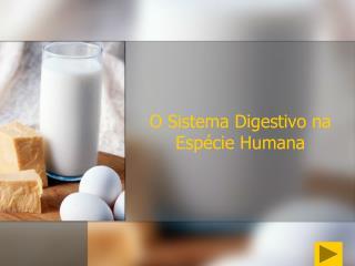O  Sistema Digestivo na Espécie Humana