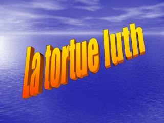 La tortue luth