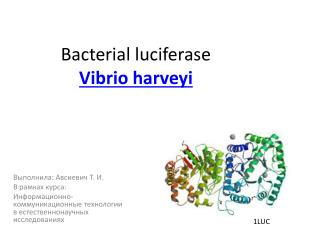 Bacterial  luciferase Vibrio harveyi
