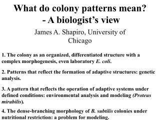 What do colony patterns mean?  - A biologist's view
