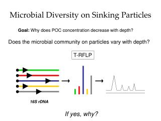 Microbial Diversity on Sinking Particles