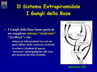 Il Sistema Extrapiramidale   I Gangli della Base
