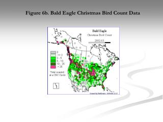 Figure 6b. Bald Eagle Christmas Bird Count Data