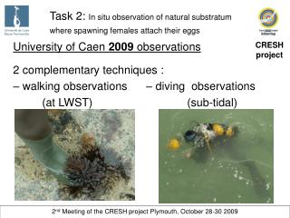 Task 2:  In situ observation of natural substratum where spawning females attach their eggs
