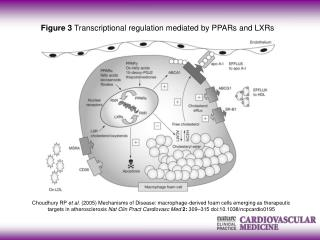 Figure 3  Transcriptional regulation mediated by PPARs and LXRs