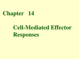 Chapter   14        Cell-Mediated Effector         Responses