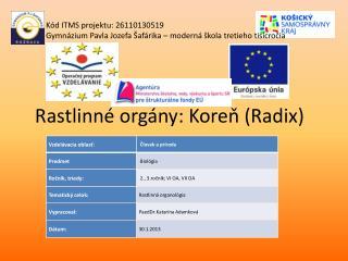 Rastlinné orgány: Koreň (Radix)