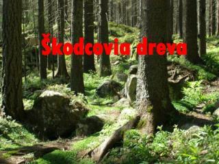 Škodcovia dreva
