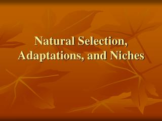 Natural Selection, Adaptations, and Niches