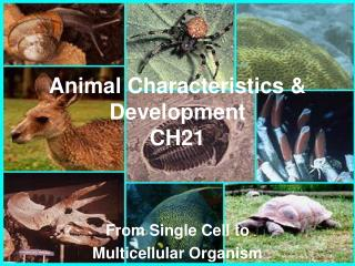 Animal Characteristics & Development CH21