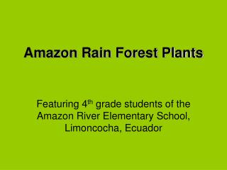 Amazon Rain Forest Plants