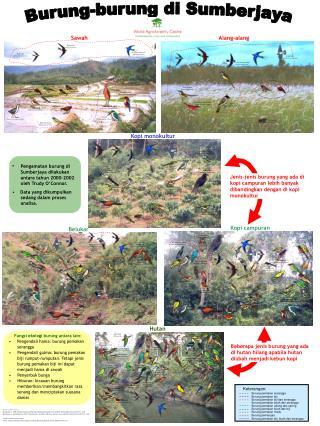 Burung-burung di Sumberjaya