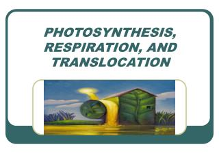 PHOTOSYNTHESIS, RESPIRATION, AND TRANSLOCATION