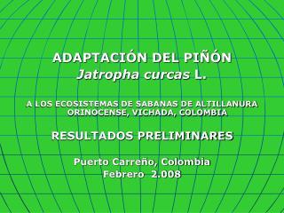 ADAPTACIÓN DEL PIÑÓN  Jatropha curcas  L.