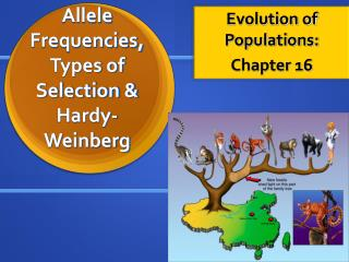 Allele Frequencies, Types of Selection & Hardy-Weinberg