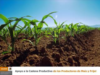 Apoyo a la Cadena Productiva  de los Productores de Maíz y Frijol