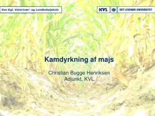 Kamdyrkning af majs Christian Bugge Henriksen Adjunkt, KVL