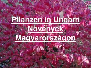 Pflan zen in Ungarn Növények Magyarországon