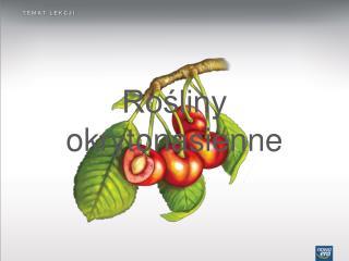Rośliny okrytonasienne
