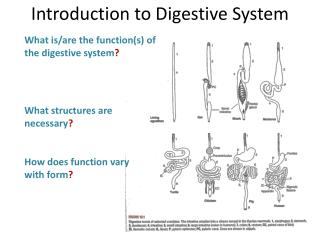 What is/are the function(s) of the digestive system ? What structures are necessary ?